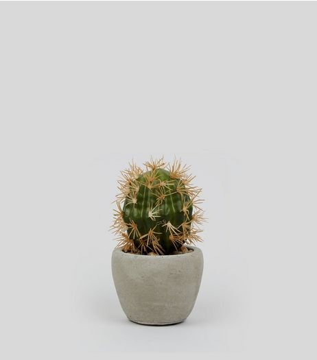 Artificial Cactus Plant | New Look